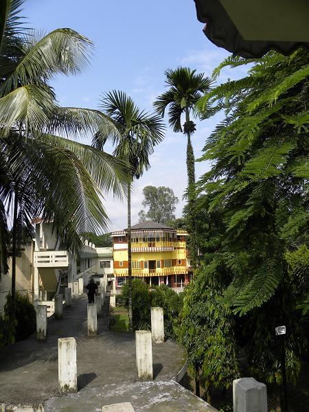 nord indien sikkim welche palmen sind das areca catechu betelpalme baumkunde forum. Black Bedroom Furniture Sets. Home Design Ideas