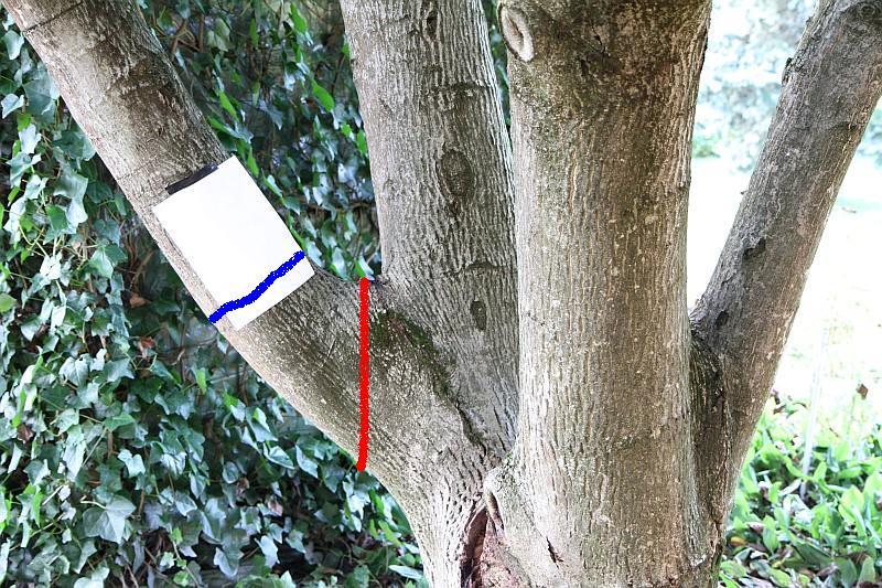 walnussbaum retten baumpech oder was verwenden. Black Bedroom Furniture Sets. Home Design Ideas